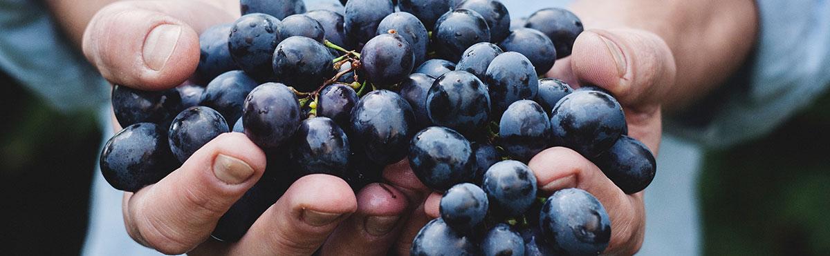 Autour de la vigne et du vin